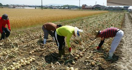 SAKURAでの作業風景の写真1